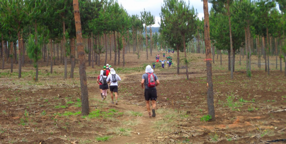 KSR 2012 crossing pin forest