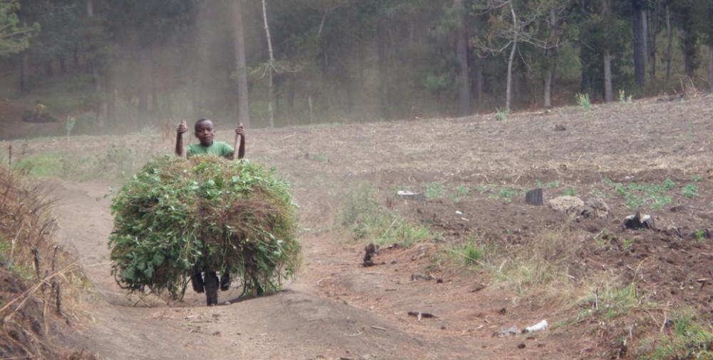 KSR 2015 Tanzania scenery