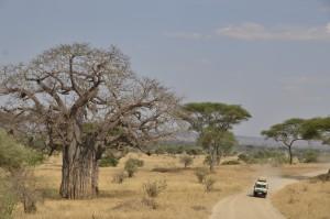 SENE safari