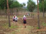 KSR 2012 crossing pin forest
